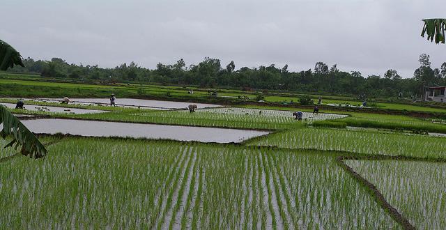 ベトナム、カンボジアからの米とたばこの輸入関税を撤廃