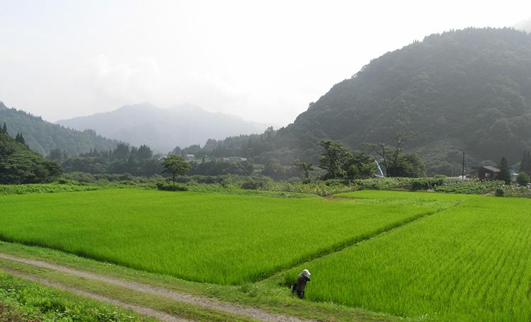 フィリピンの国際稲研究所が、ASEANの閣僚会議で10の行動計画