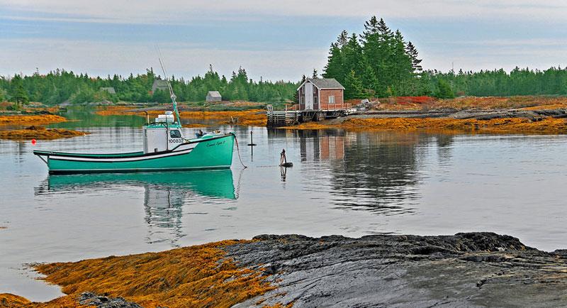 ベトナム水産総局、海藻の養殖を奨励、日本にも輸出