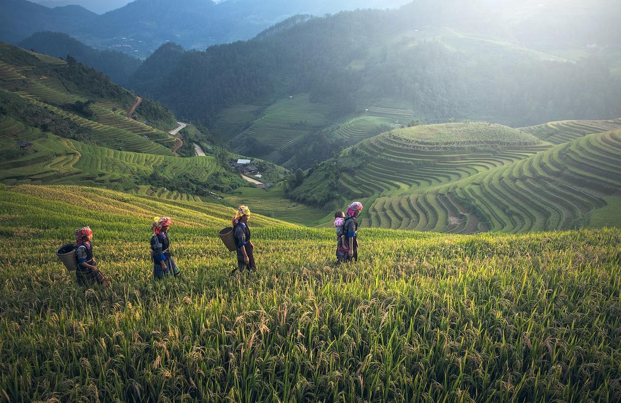 ミャンマー・ヤンゴン市郊外の農地を外国人投資家向けに長期レンタル計画