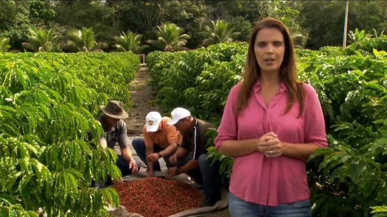 ブラジル:バイーア州のコーヒー生産は順調