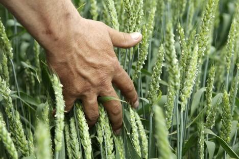 欧米の食品の禁輸から3年