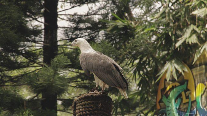 ダバオ地域の猛禽類保護の取り組みを加速させる