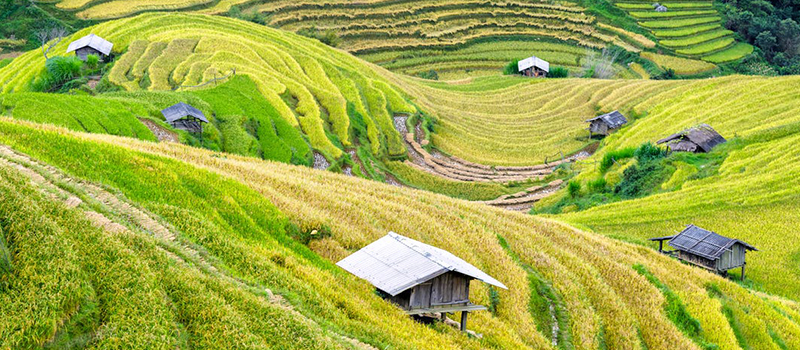 JICA(ジャイカ)、ベトナムでの農業パートナーシップを求める