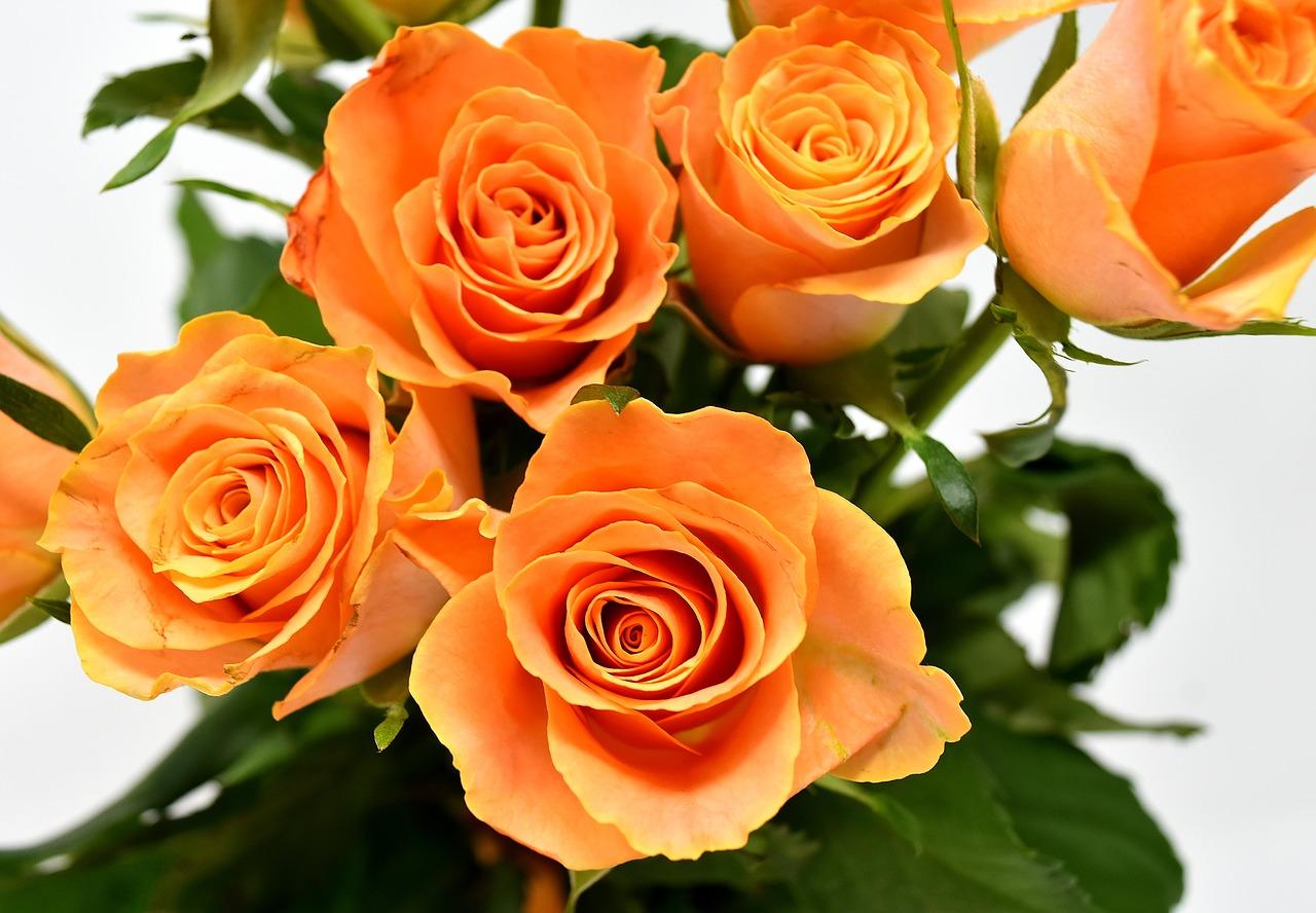 香港のバレンタインデーで深紅のバラが人気  客単価は約1,700香港ドル