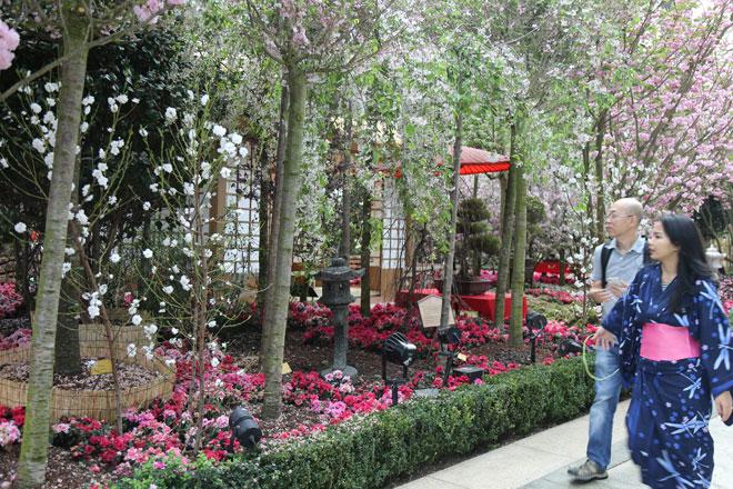 満開の桜の下で日本文化を体感 シンガポールで「Sakura JAPAN FAIR」開催