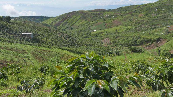 フィリピン・ダバオで先住民コーヒー農家を支援 日本にも輸出実績