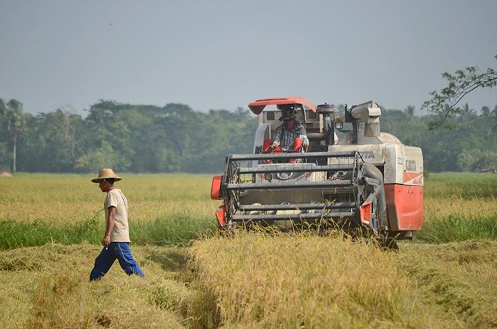 外資によるミャンマーの農業投資が増加 今後も外資誘致に期待