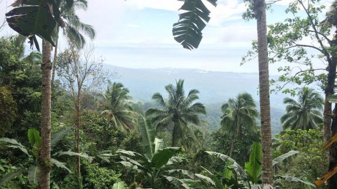 フィリピン・ダバオで水不足 ココナッツ農家は海水の淡水化に注目