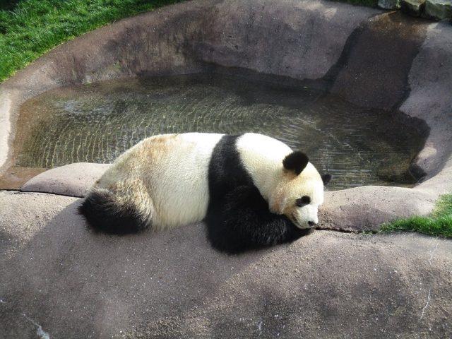 訪日客にも人気の施設ランクイン! 「日本の動物園・水族館ランキング2018」