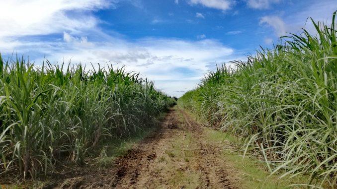 フィリピン・ダバオ市、森林保護のための行動計画が承認される