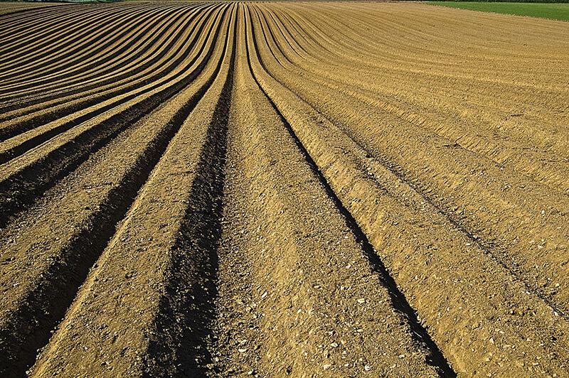 フィリピン・ダバオで有機農業が活況 100ヘクタールの土地でも実施