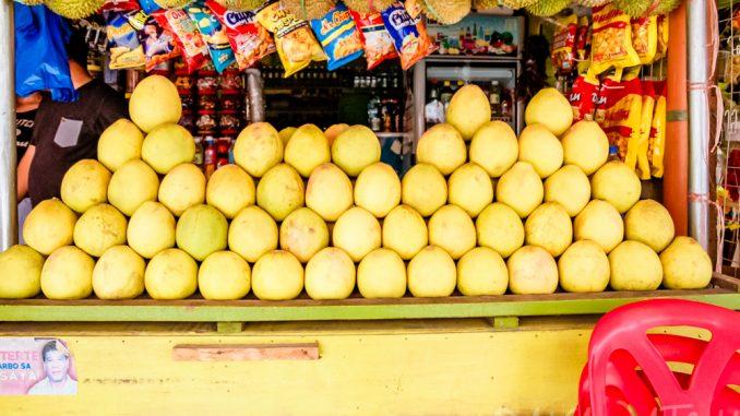 フィリピンでココナッツ農家を支援する法律が可決 ココナッツ産業発展に期待