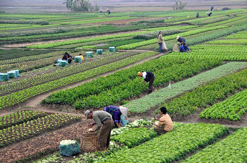 日系企業が注目するベトナム北部のハナム省とは…?