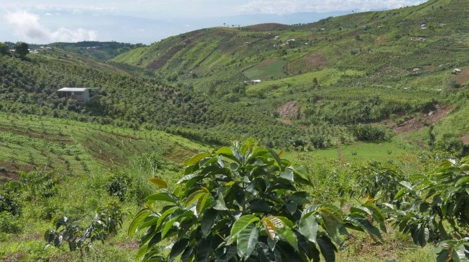 フィリピン ダバオ・環境ボランティア団体の報告を基に対策を命じる