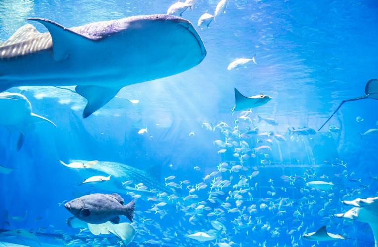 フィリピン:セブ市に大規模水族館施設 部分開業