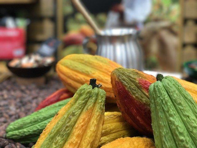 フィリピン:ダバオ産カカオに世界が注目、マラゴス農業ベンチャーがカナダへの輸出を検討